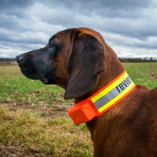 GPS-Hundeortung